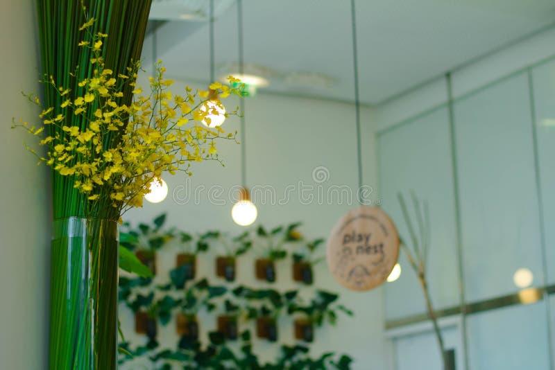 Indoor Plants Free Public Domain Cc0 Image