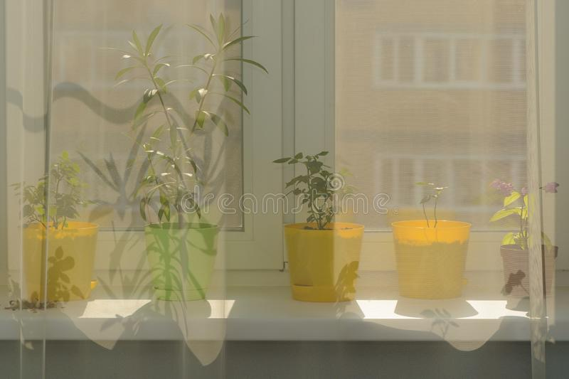 Indoor plants in pots on the windowsill stock images