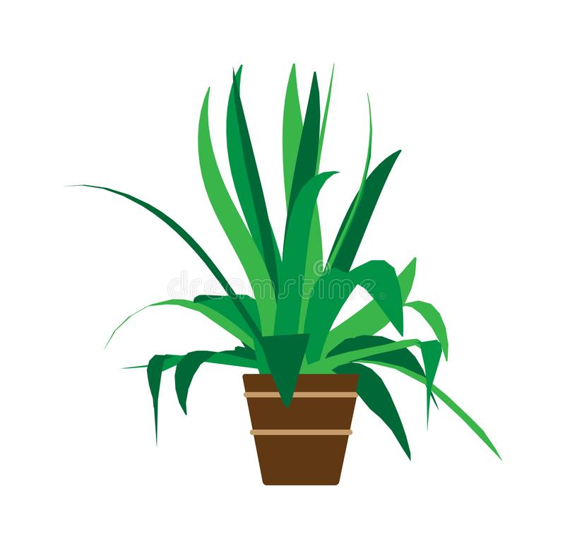 Indoor pot plant home vector. Floral green cartoon interior icon. Summer flower room graphic illustration. Office decoration small royalty free illustration