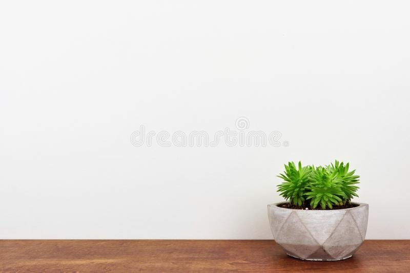 Succulent plant in a cement pot on wood shelf against a white wall. Indoor succulent plant in a cement pot. Side view on wood shelf against a white wall. Copy stock image