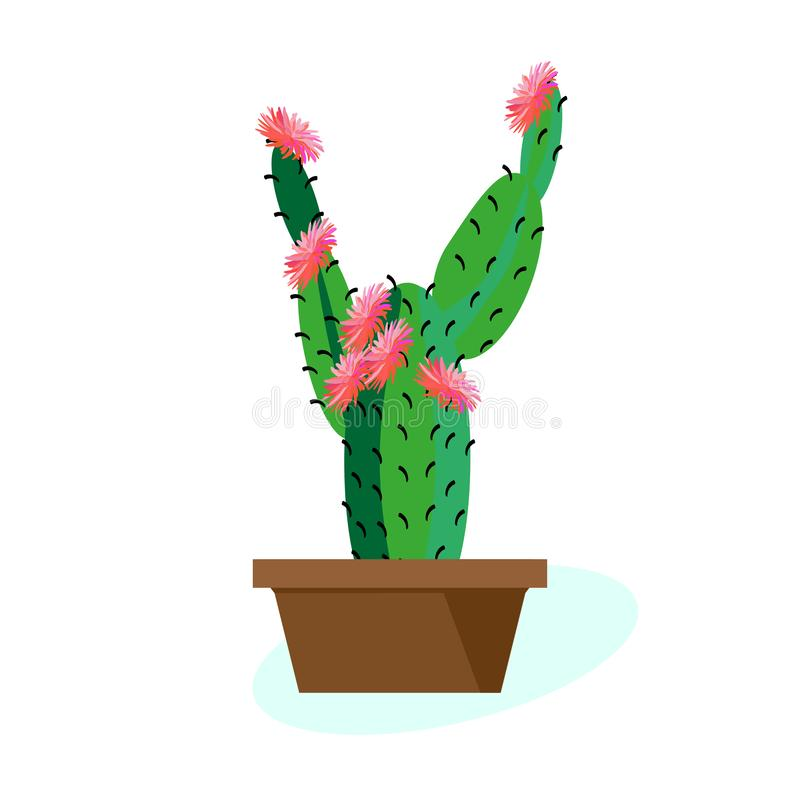 Indoor tropical plant Cactus blooms in pot. Vector drawing on white background. Large plant in ceramic pots. stock illustration