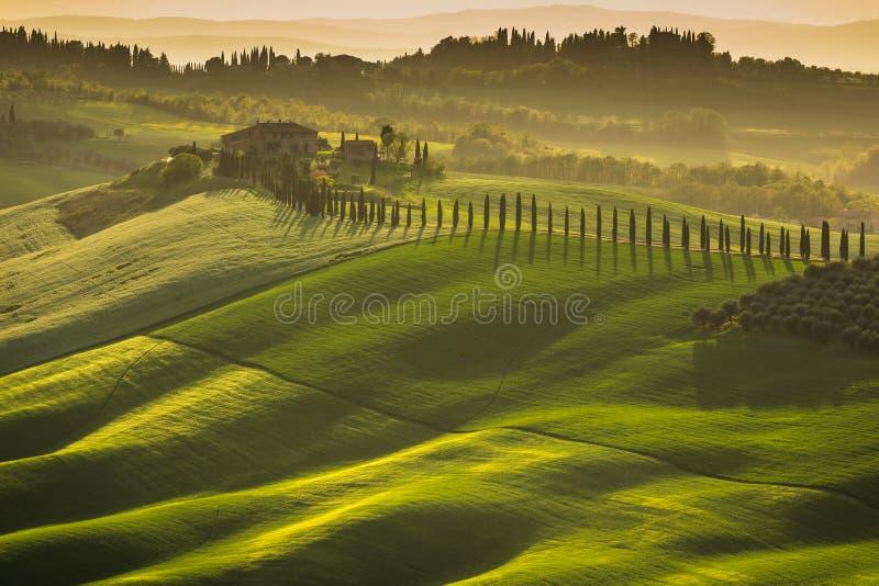 Indrukwekkend de lentelandschap, mening met cipressen en wijngaarden, Toscanië, Italië stock fotografie