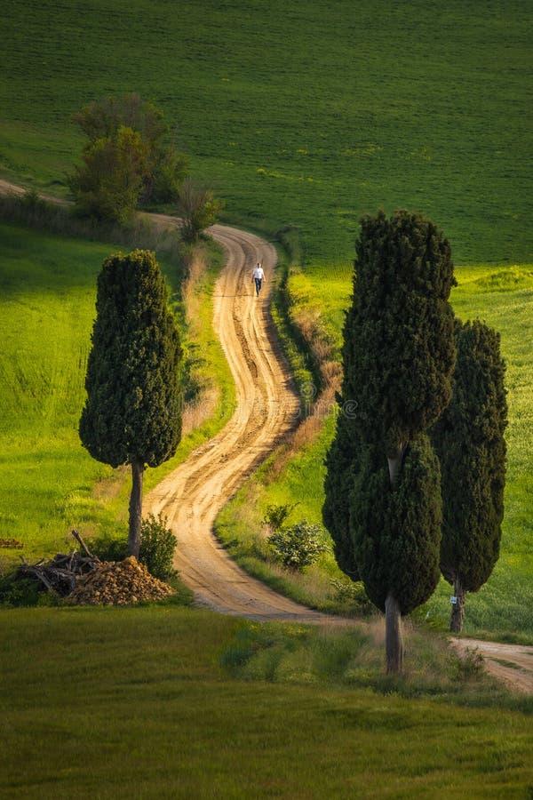 Indrukwekkend de lentelandschap, mening met cipressen en wijngaarden, Toscanië, Italië stock afbeeldingen
