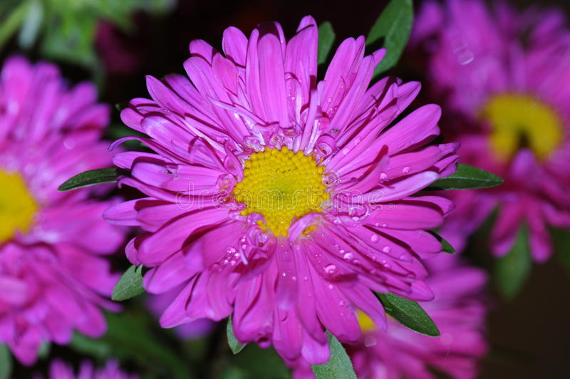 Indrukwekkende kleurrijke bloem in macromening stock foto