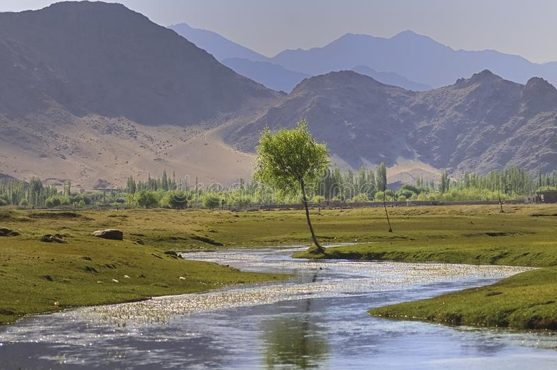 Indus river flowing through plains in Ladakh, India,. Asia. Immediate surrounding of the stream is green, which eventually gives way to barren land stock photo