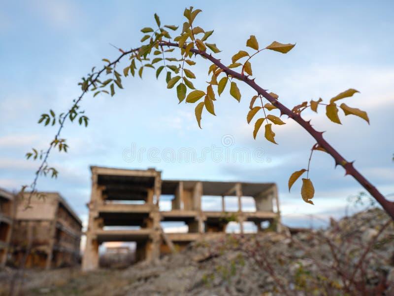 Industriële ruïnes bij zonsondergang royalty-vrije stock afbeelding