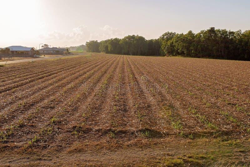 Industria agricola vicino alla città immagini stock