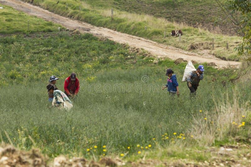 Industria de la agricultura: Trabajadores de los granjeros en campo imagen de archivo