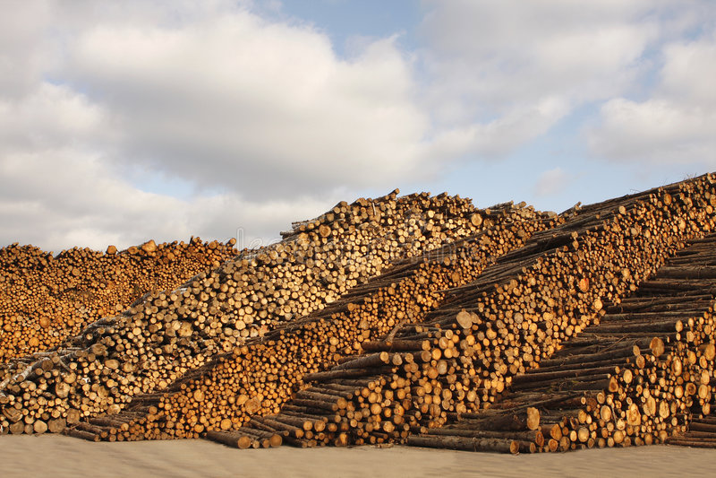 Industria di silvicoltura immagine stock libera da diritti