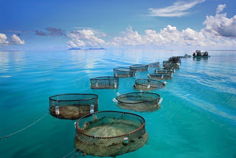 Industria pesquera marina en el mar de la turquesa foto de archivo
