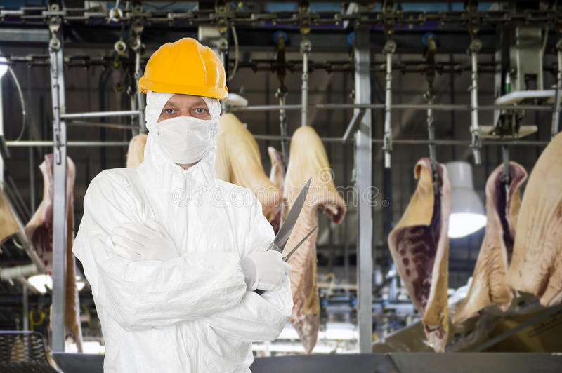 Industrial butcher. Posing with two filleting knives, wearing protective and hygienic clothing, such as a white suit, mouth piece or mask and a yellow hard hat royalty free stock photos