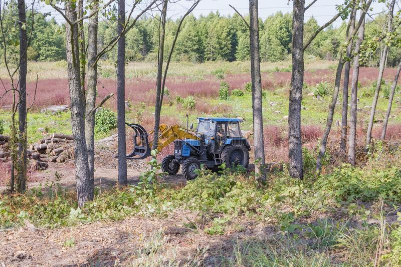 Industrial deforestation by forestry workers using machinery. Deforestation and loading, the work of the forest industry and a permanent business of people, pine stock photos