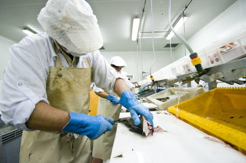 Industrial fish filleting stock photos