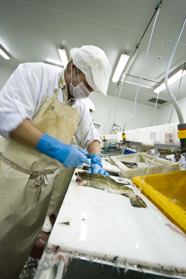 Industrial fish filleting royalty free stock photos