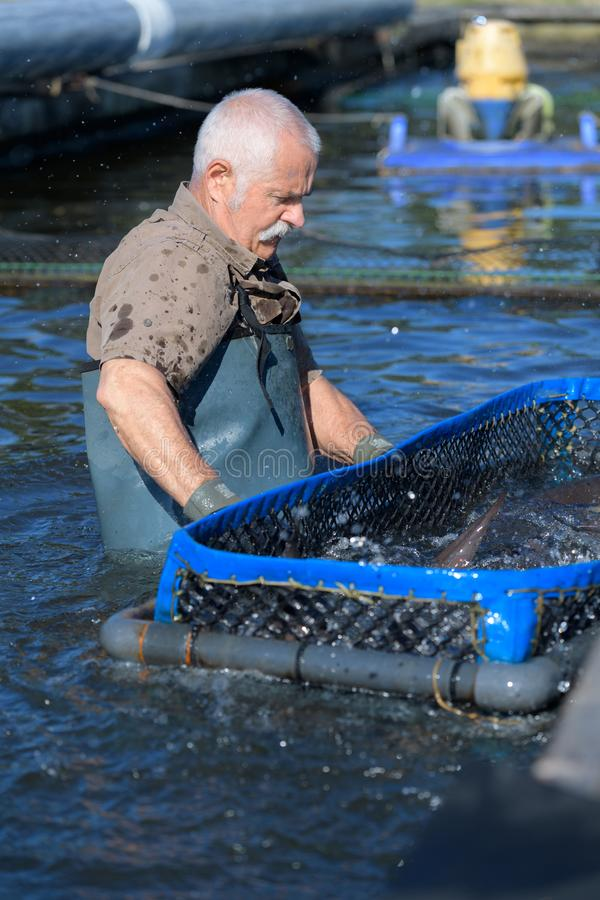 Industrial fisherman harvesting fish. Aquaculture stock photos