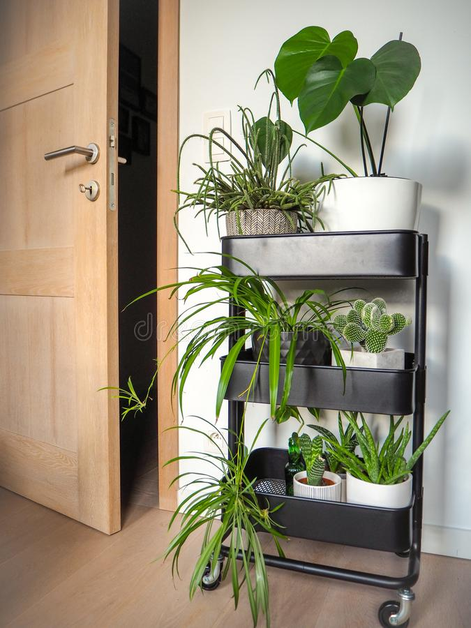 Industrial grey trolley filled with different green houseplants creating an indoor vertical garden stock photography