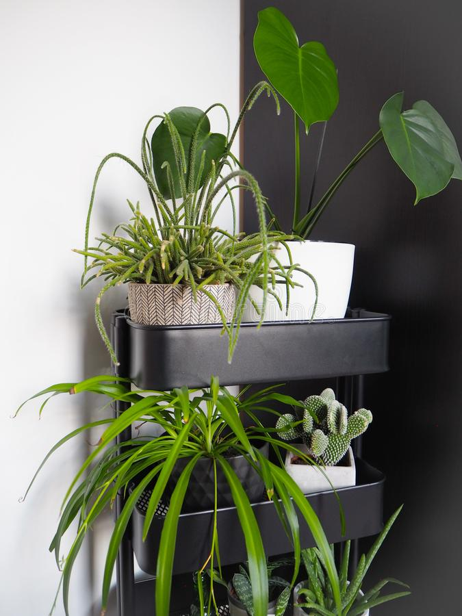 Industrial grey trolley filled with different green houseplants creating an indoor vertical garden stock photo