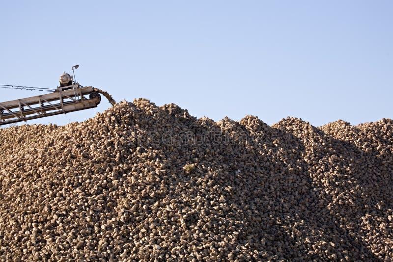 Industrie de betterave à sucre images libres de droits