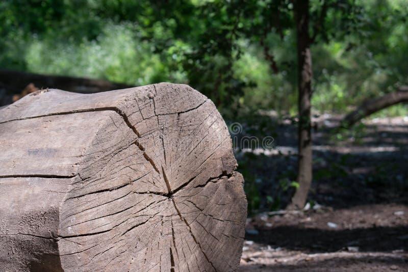 Industrie de bois de charpente d'arbre photographie stock