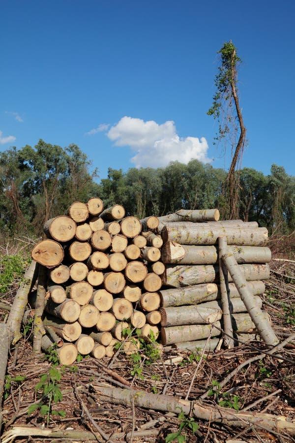Industrie de bois de charpente photos libres de droits