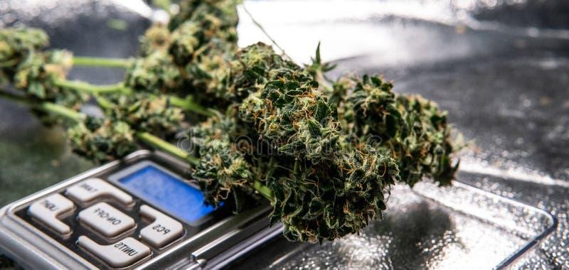 Industriell produktion av marijuana för medicinska avsikter Medicinska cannabisanvändare royaltyfri bild