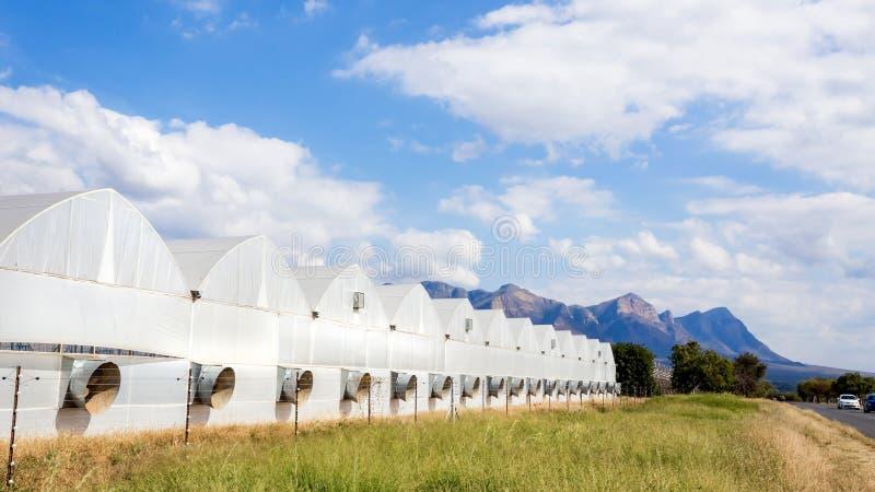Industrielle Landwirtschaftsgewächshäuser in Südafrika lizenzfreies stockbild