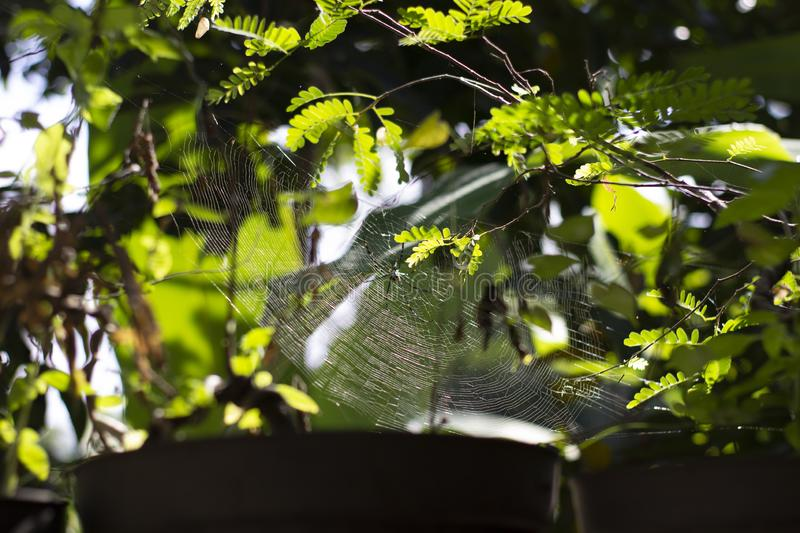 Industrious spider had spun an amazing web royalty free stock photo