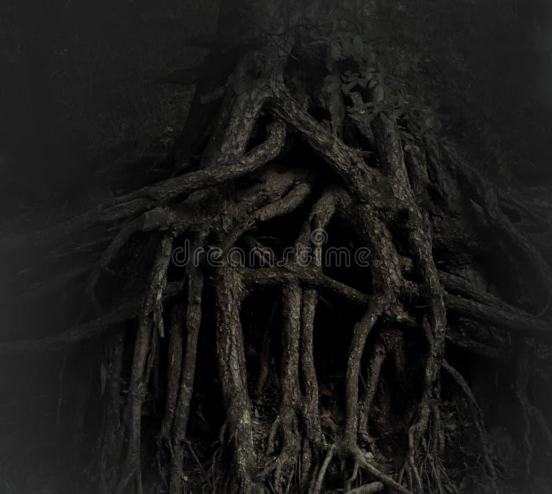 Ineengestrengelde wortels van een oude boom, zwart-witte foto stock foto's