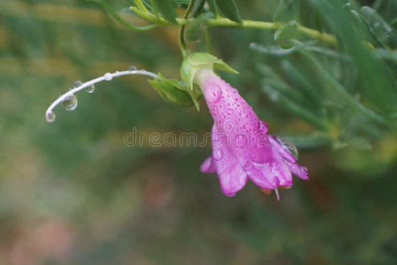 Infödd blomma arkivfoton