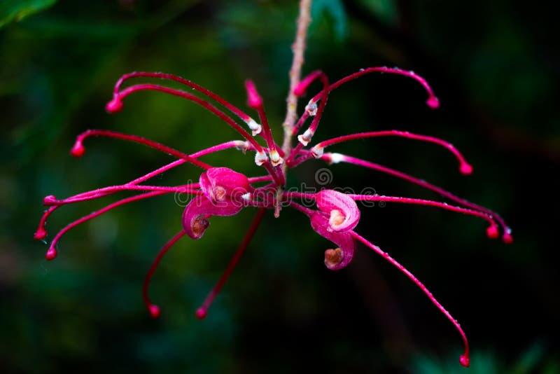 Infödd blomma efter regnet arkivbild
