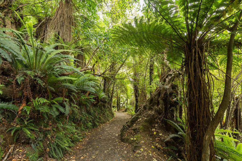 Infödd buske av Nya Zeeland royaltyfri fotografi