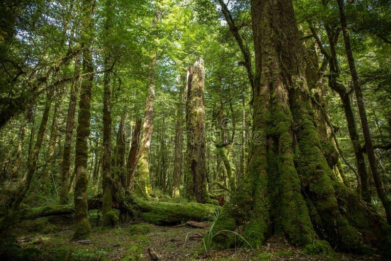 Infödd buske, Nya Zeeland royaltyfri foto