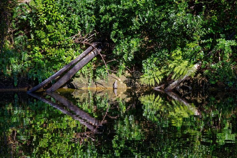Infödd buske reflekterad i en ström royaltyfri bild