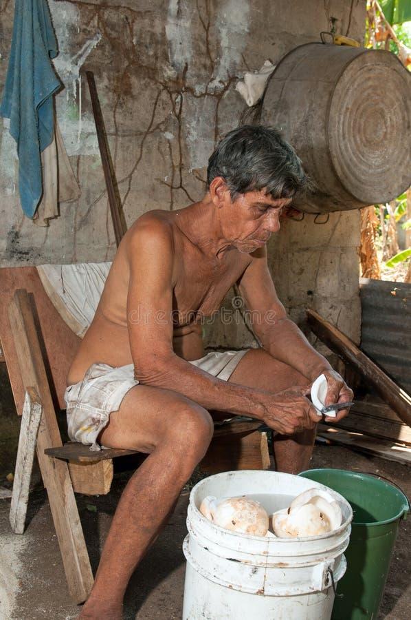 Infödd lokalvård för hög man som skivar den nya kokosnöten för produktion arkivfoton