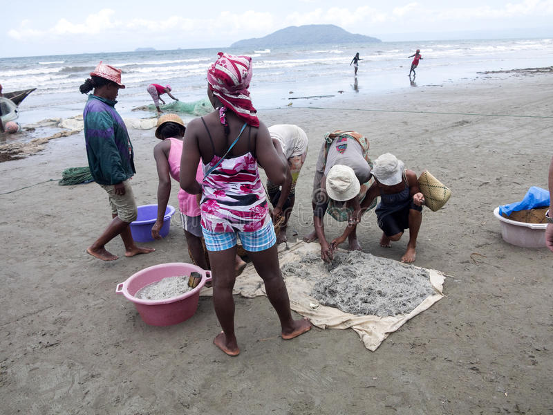 Infödda fiskare drar förtjänar, Antsiranana, Madagascar royaltyfri foto