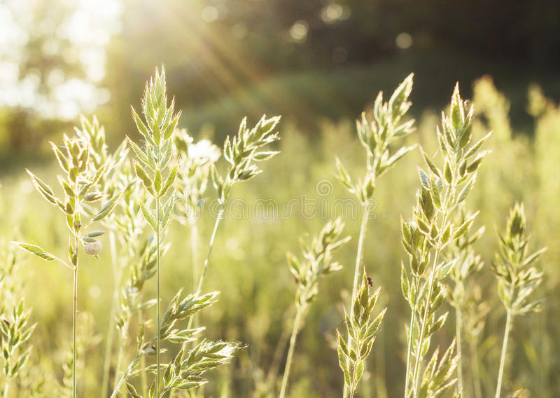 Infödda gräsprärier och solnedgång royaltyfri fotografi