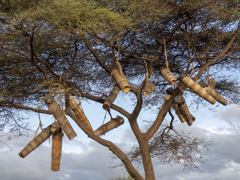 Infödingar gör bikupor och hänger dem på träd, Etiopien royaltyfri foto