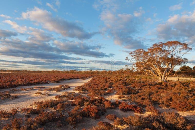 Infött australiskt strandbuskelandskap på solnedgången royaltyfri bild