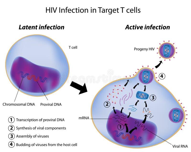 Infecção de célula T pelo HIV ilustração royalty free