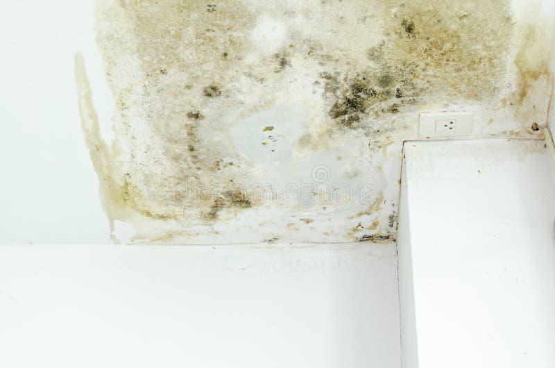 Infección fungosa en la pared imagen de archivo libre de regalías
