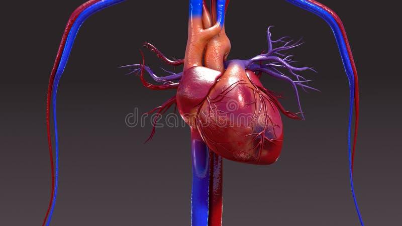 Infection d'appareil circulatoire illustration libre de droits