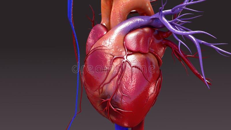 Infection d'appareil circulatoire illustration stock