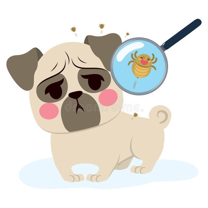 Infection de parasite de chien illustration libre de droits