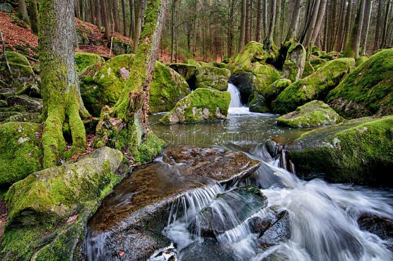 Inferno della riserva naturale fotografia stock