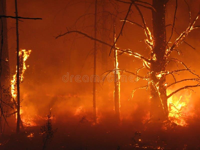 Inferno na floresta imagem de stock