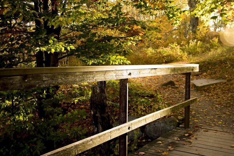 Inferriata boscosa sul percorso alla luce solare immagine stock