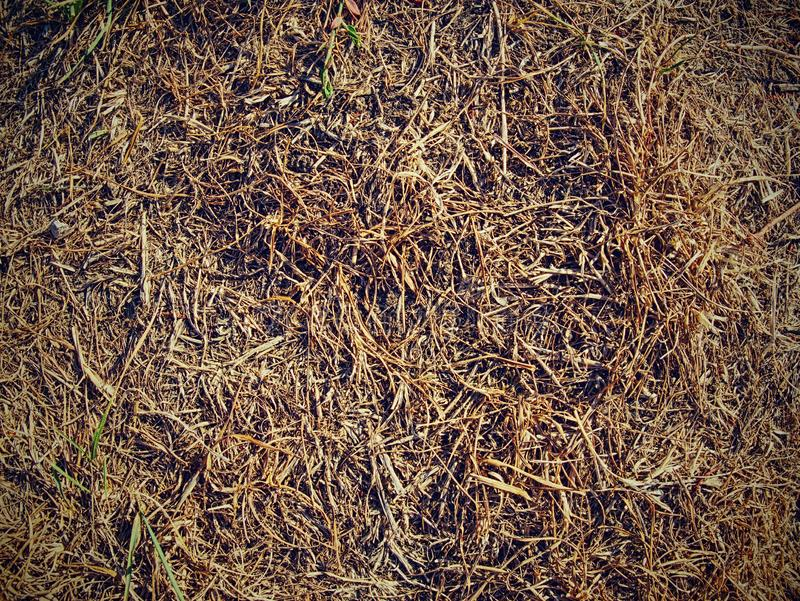 Infertile ground with burnt dry grass stalks. Cracks royalty free stock photography