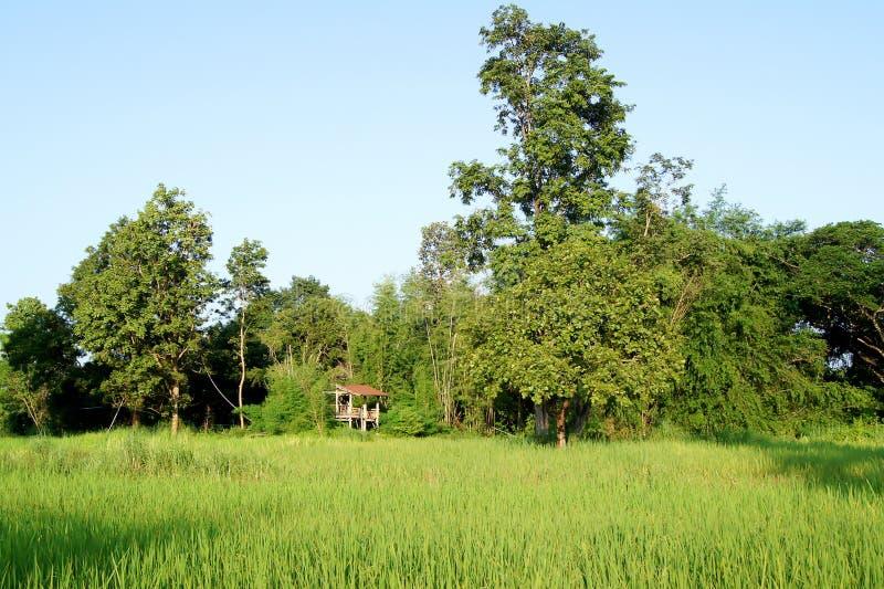 Infield heeft kleine hutgebieden heeft een kleine hut stock afbeelding