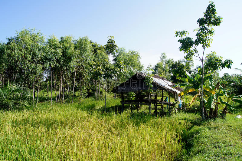 Infield heeft kleine hutgebieden heeft een kleine hut stock fotografie