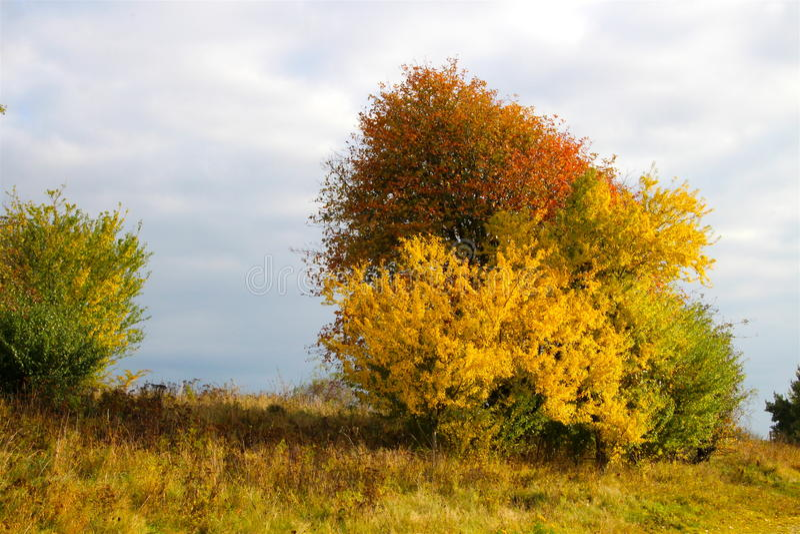 Infierno de colores en octubre imágenes de archivo libres de regalías